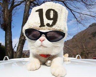 number19cat
